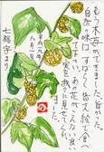 七福字さんの絵てがみ ~木苺の実
