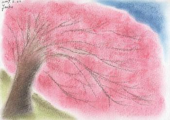 シータさんのパステル画 ~しだれ桜