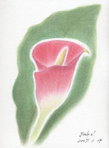 シータさんのパステル画 ~カラー