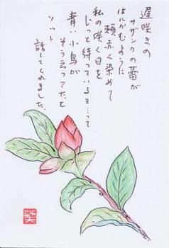 ミチオさんの絵てがみ ~遅咲きのサザンカ