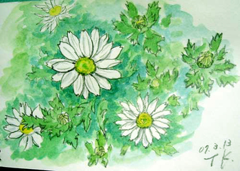 花壇の白い花