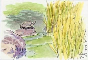 水交会の亀