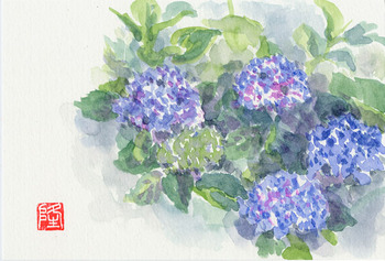 母を思いて ~紫陽花